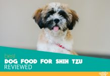 Featured image of black brown and white shih tzu dog