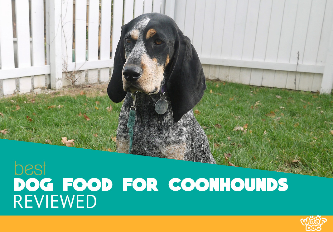 Featured image of bluetick coonhound dog in the garden