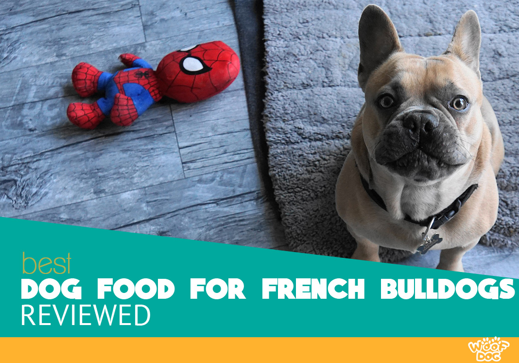 Featured image of french bulldogs and toy