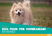 Featured image of sweet pomeranian canine