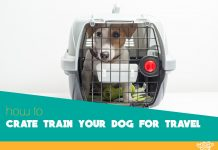 Featured image of dog prepared for travel