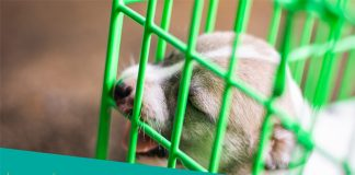 Featured image of small dog in the crate
