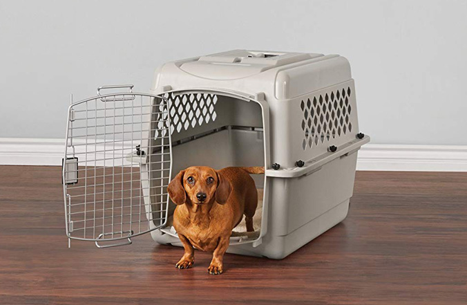 Image of dachshund in a plastic crate