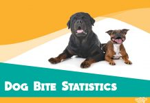 featured image for dog bite statistics