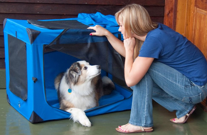 image of dog in blue soft sided crate