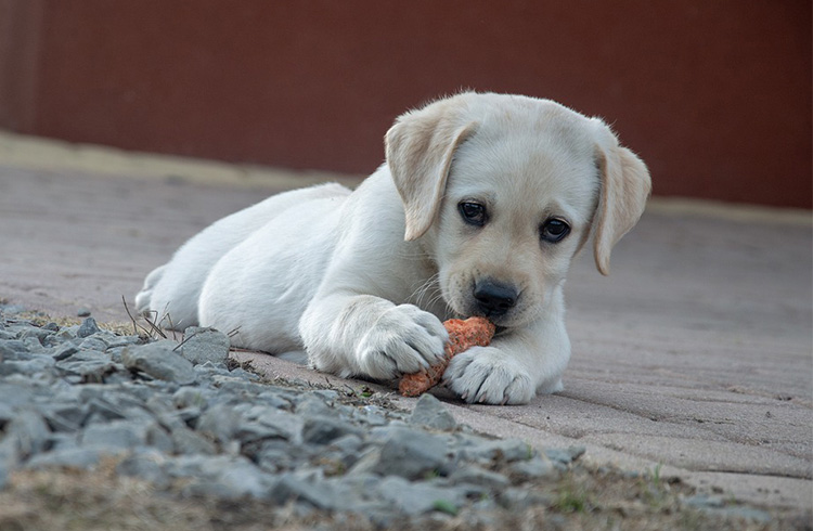 Image of sad dog chewing