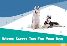 cold weather safety tips for dogs