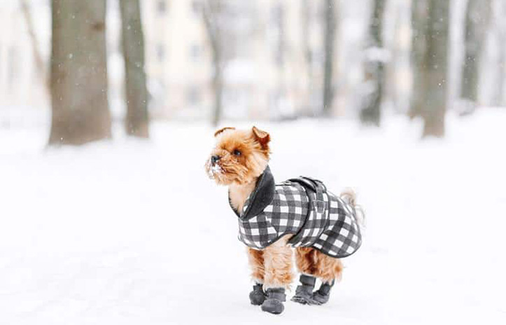 image of dog in a snow wearing coat and boots