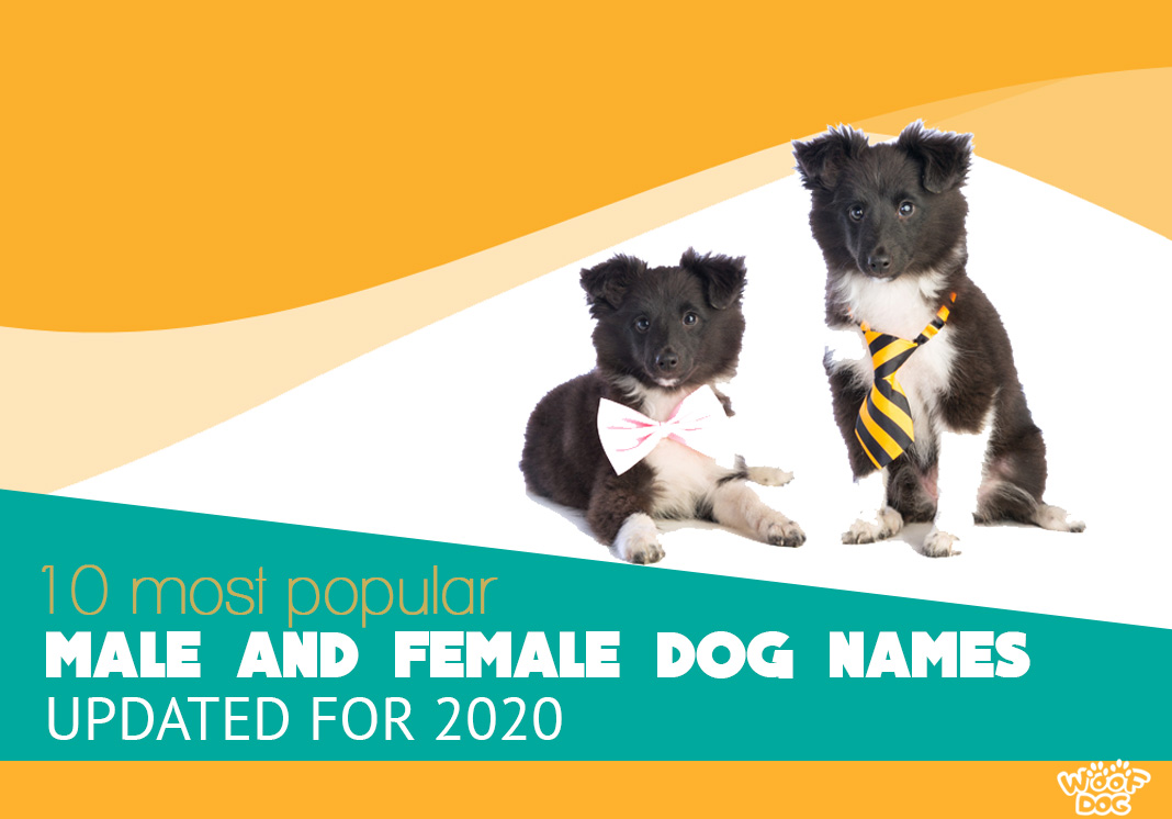 Top 10 Most Popular Dog Name Predictions In 2020 Woof Dog