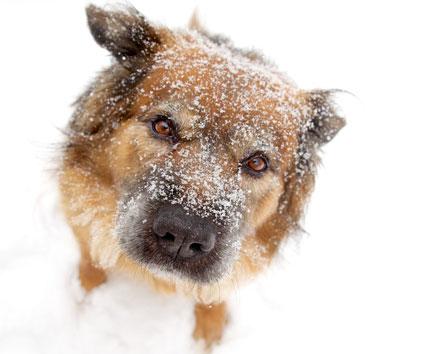 snowy dog image