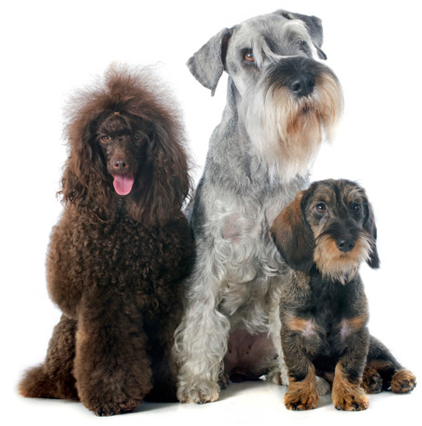 three dogs of different breeds