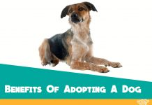 benefits-of-adopting-a-rescue-dog-featured-image