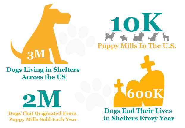 illustration of dog adoption statistics