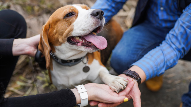 image-of-human-and-beagle-shaking-hand-paw