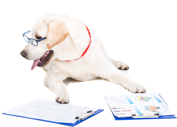 image of white labrador working on some documents