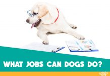 jobs for dogs featured image