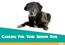 Tips for Looking After your Senior Dogs