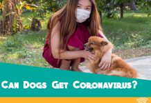 COVID-19 Coronavirus & Dogs