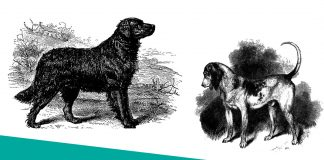 Extinct and Rare Dog Breeds featured image