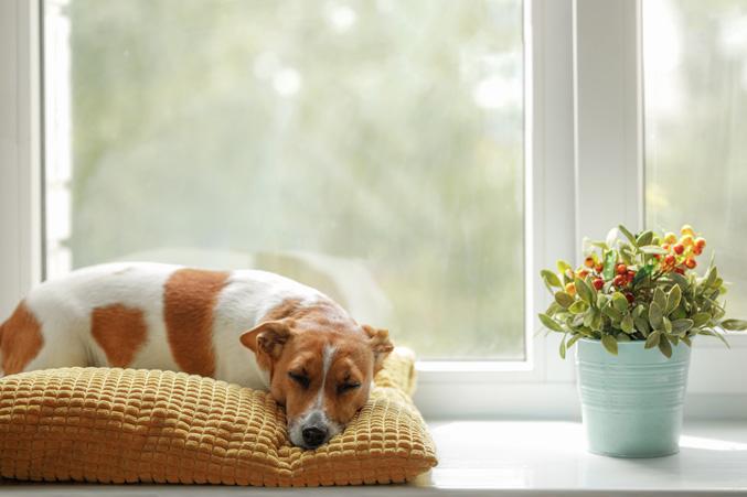 image of dog sleeping during quarantine