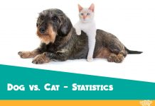 dog and cat difference and comparison