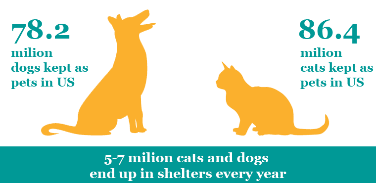dogs and cats ownership statistic illustration