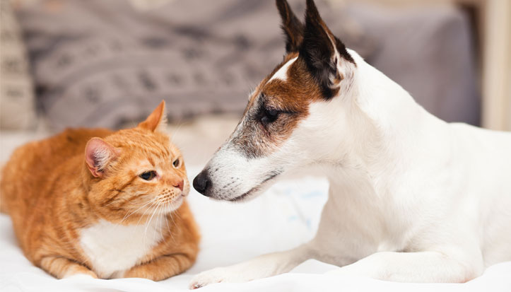 image of cat and dog getting know each other