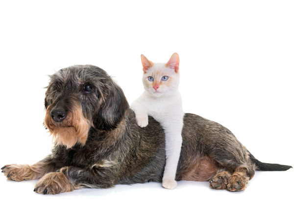 image of dog and cat hanging out