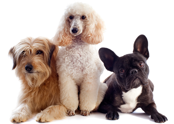 image of three different dog breeds
